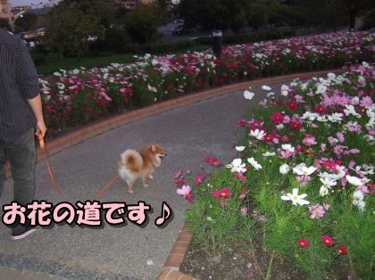 20111121_10.jpg
