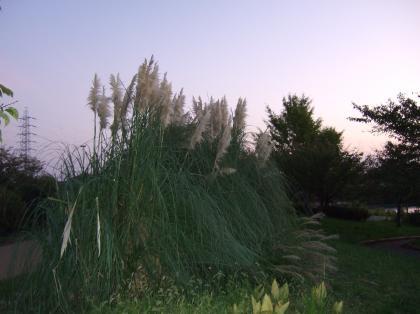 20111121_11.jpg