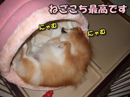 20111209_5.jpg