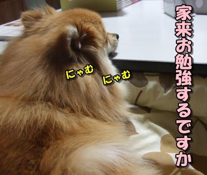 20120207_9.jpg
