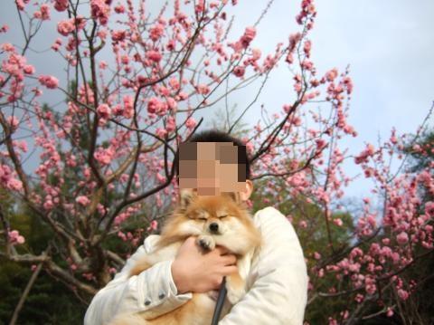 梅の木②+ココ