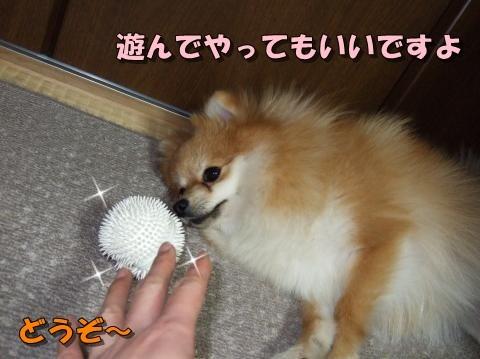 ボールどうぞ~