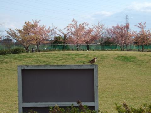鳥さん日光浴