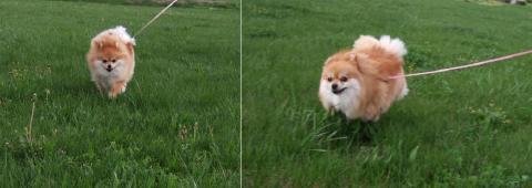 飛行犬?!