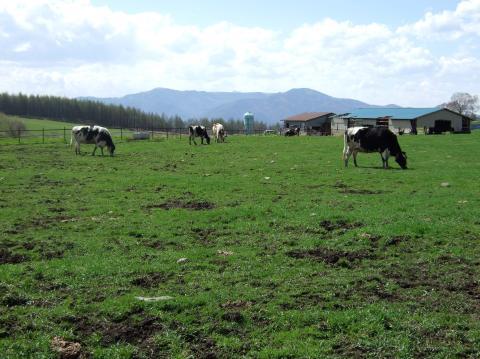 牛さんいっぱい