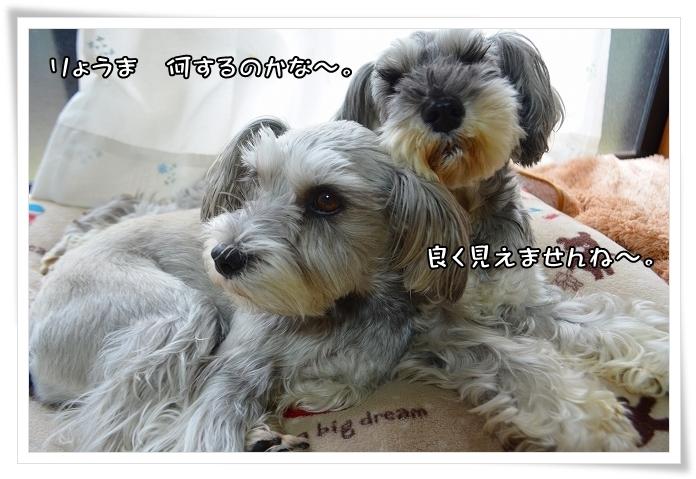 coconon_20140108_249691.jpg