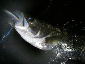2010-11-13 _01