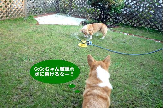 14CoCoちゃんガンバレ 1(1)