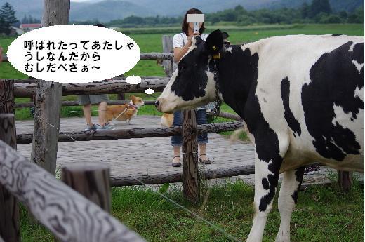 3牛と記念撮影