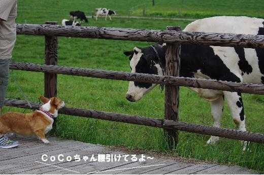8牛とCoCoちゃん
