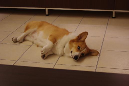 どこでも寝れます。