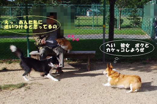 4 タロ&ボーちゃん1