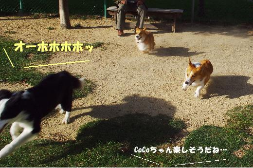 8 タロ&ボーちゃん5
