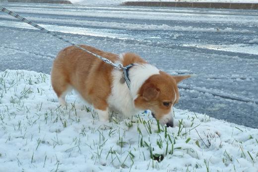 10 雪を楽しむタロウ