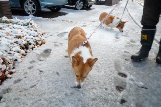 6 雪食う犬2