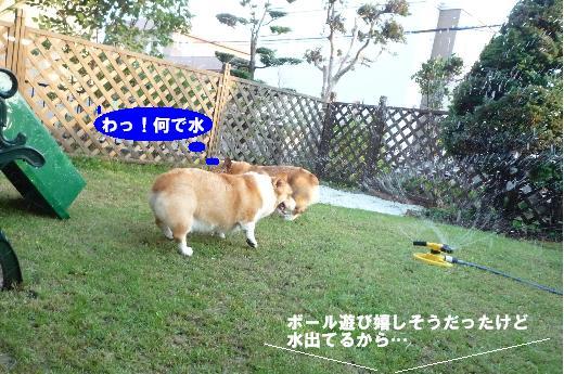 4_20100907113407.jpg