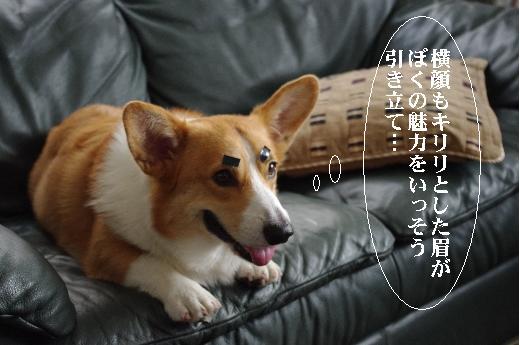 6_20100820155523.jpg