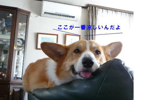 7_20100901230129.jpg
