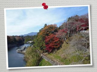 桜淵紅葉2013-1
