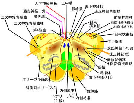 enzui