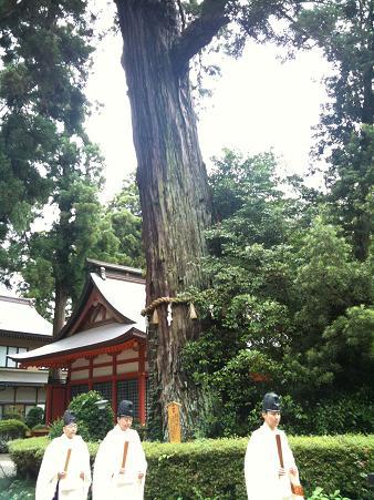 香取神宮ご神木