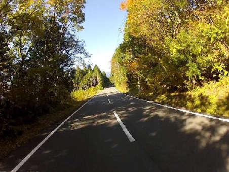 木陰の中20121110