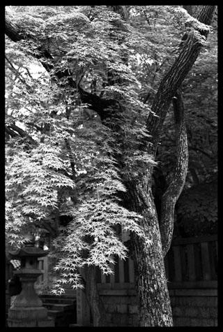 湊川神社127