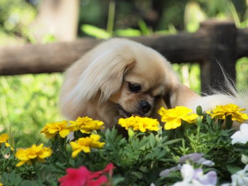 お花きれいだね!