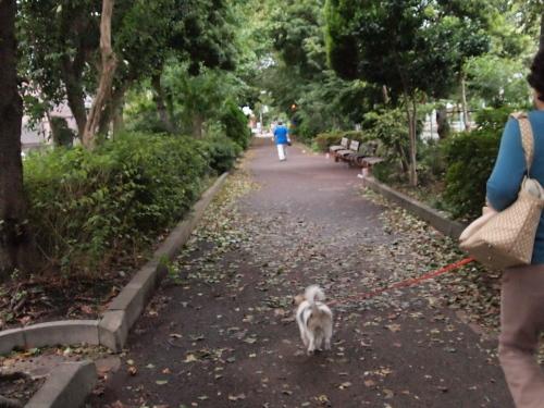 緑道を駆ける