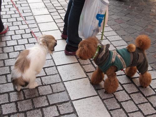 ⑮服着た犬とハダカのこなみ