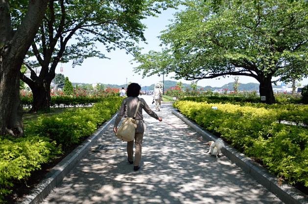 ④公園を歩く