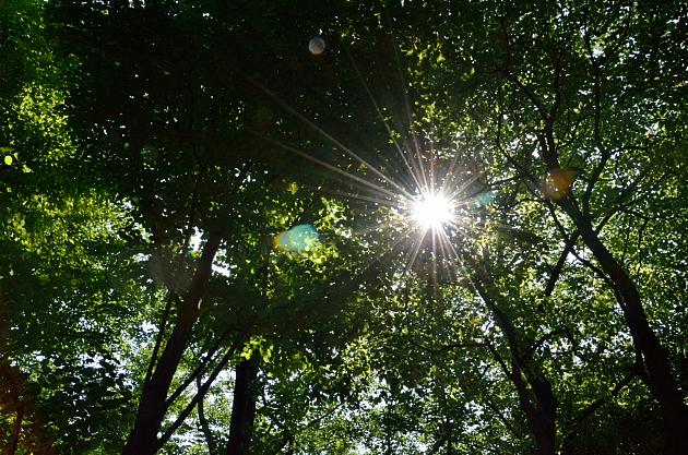 ⑤木洩れ日