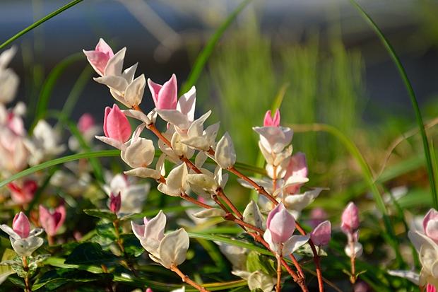 ④晩夏の草花