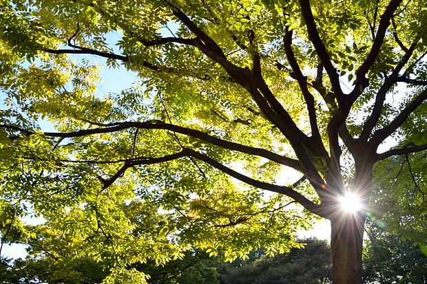 ⑤公園の木洩れ日
