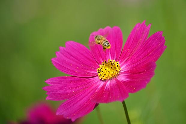 ③蜜蜂ハッチ?