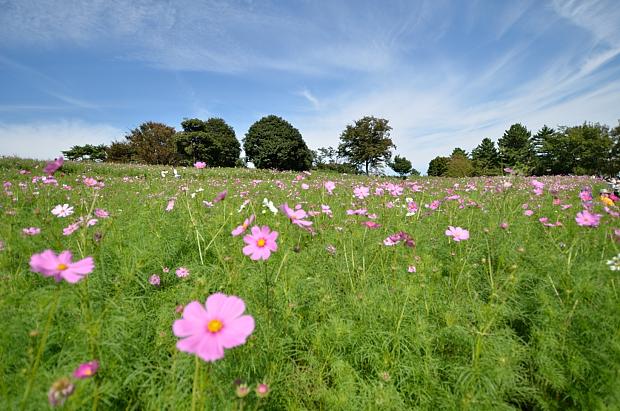 ⑭a花の丘