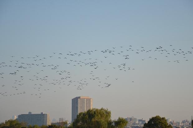 ②渡り鳥の季節
