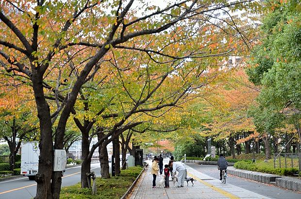 ①桜並木も色づき始めた