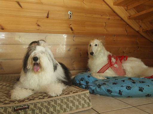 レックス&Cookie