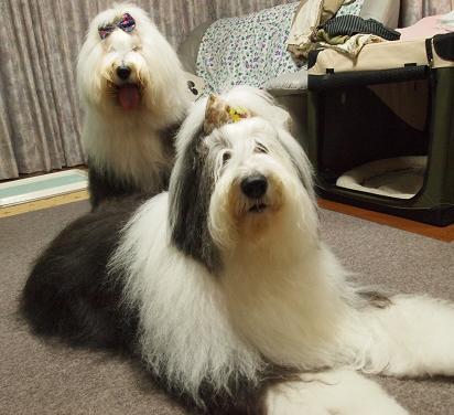 あられ&Cookie