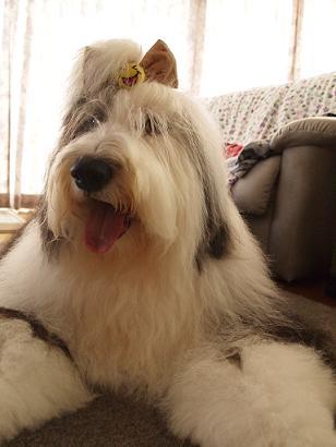 Cookie_20110905191339.jpg