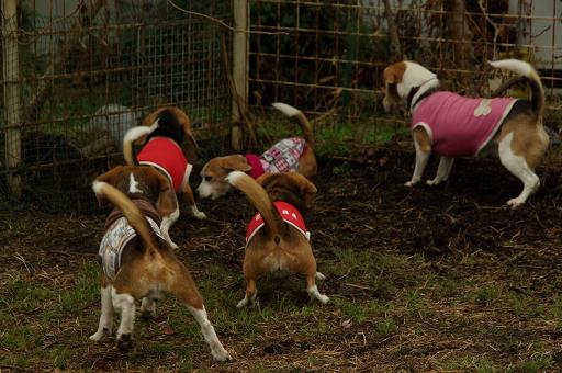 120122-31brownbeagles.jpg