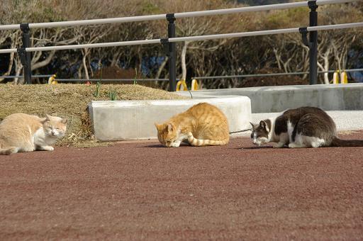 120303-09cats.jpg