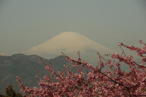 120320-14sakurafuji01.jpg