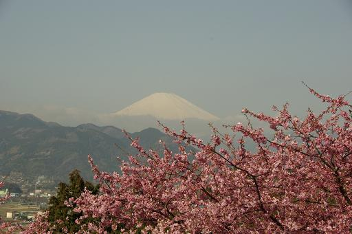120320-16sakurafuji03.jpg