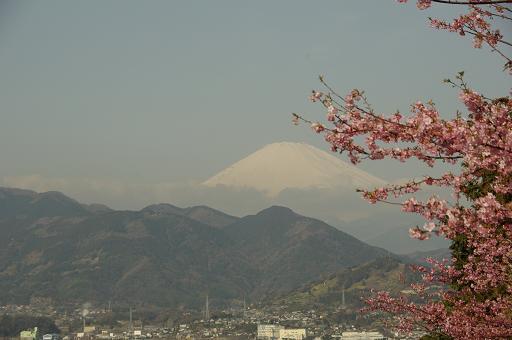 120320-18sakurafuji.jpg