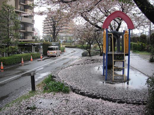 120414-05sakura02.jpg