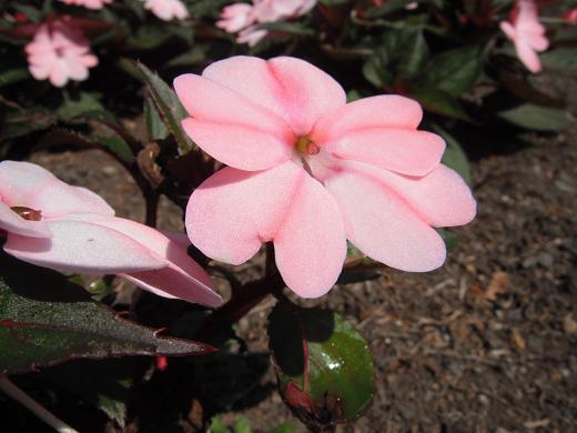 120711-11flower.jpg