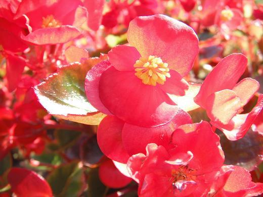 120711-17flower03.jpg