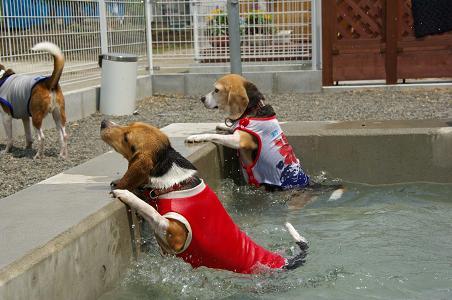 100801-17cookysumomo in pool